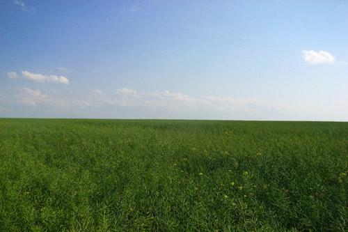 Тернопольский земельщик незаконно отдал 2 га земли