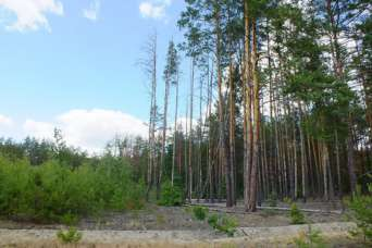 Лесные земли под Вышгородом истребовали из незаконного владения