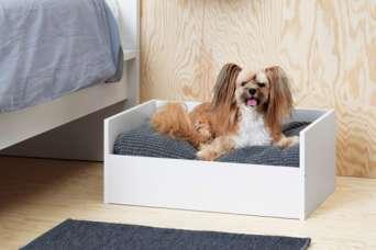 Архитектура для собак
