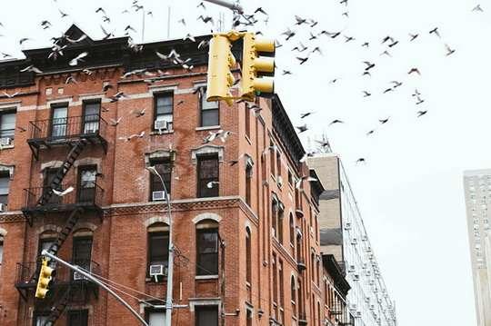 Нью-Йорк запрещает остекление зданий, которое опасно для птиц