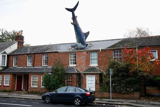 Курьезы: как акула врезалась в крышу дома. Фото