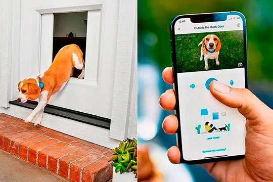 В США изобрели «умные двери» для домашних животных. Видео