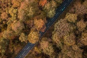 Для спасения от жары дороги заменят зеленью