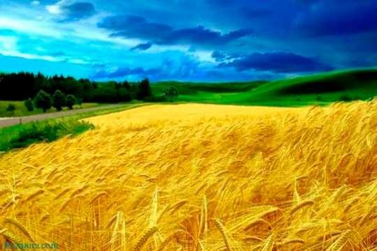 Классификация земель Украины в зависимости от целевого назначения