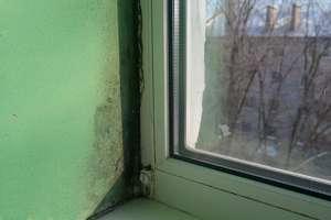 Как избавиться от плесени на пластиковых окнах и откосах