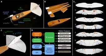 В США создали бионический беспилотник с крыльями из голубиных перьев. Видео